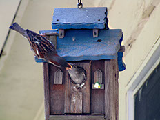original photo of a birdhouse by Herb Rosenfield of the AFCCenter of Cheshire, CT.